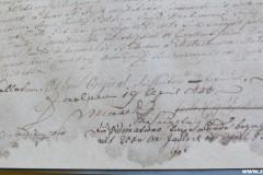 Rękopis - Akt Królewski Oryginał Łaciński