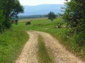44img_0296_zaleze_lato_2012