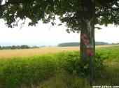 49img_0528_zaleze_lato_2012