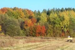 Załęże w kolorze jesieni